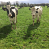 The Importance of a Safe and Clean Calving Environment
