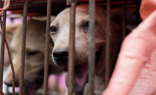 Campaigns Against Dog Meat Eating in China