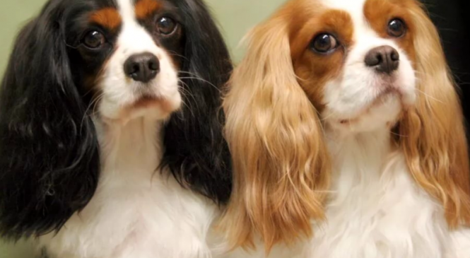 What Sort of Dog Should You Get for Your Family?